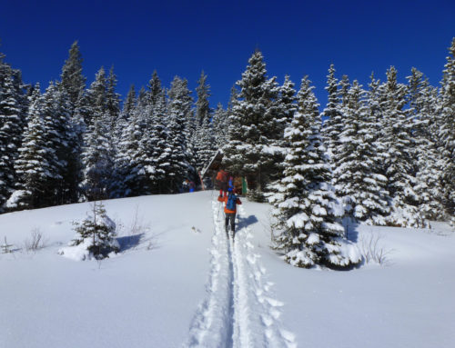Member Club Profile: Hickory Wing Ski Touring Club