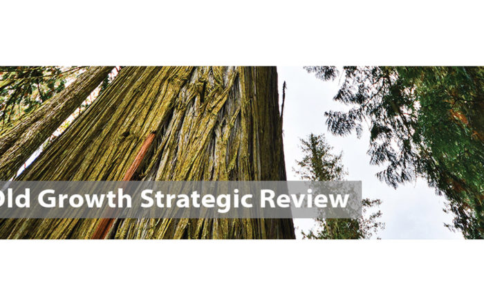 Old-Growth Strategic Review by BC Government
