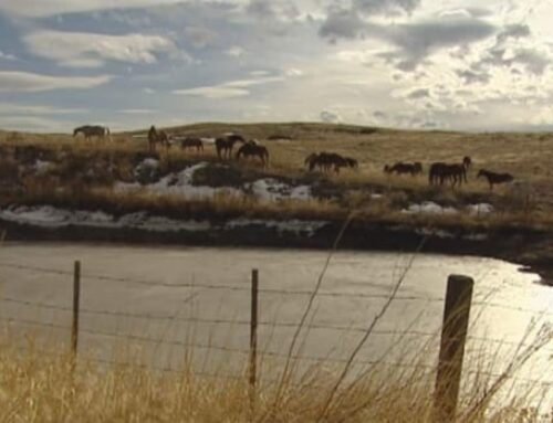 Court rules 2 B.C. lakes cannot be publicly accessed, siding with Canada's largest cattle ranch
